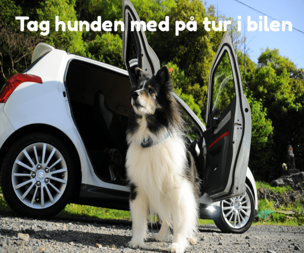 Tag hunden med på tur i bilen